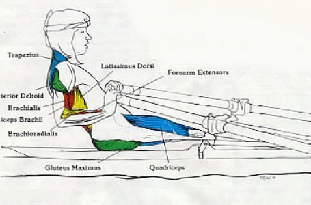 Biomechanics Of Rowing